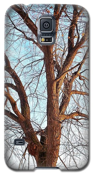 Galaxy S5 Case featuring the photograph Winter Light by Chalet Roome-Rigdon