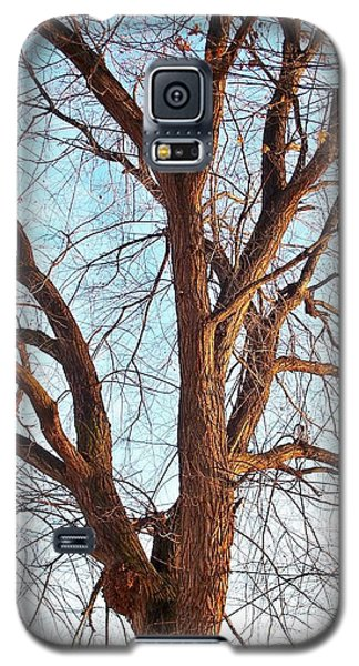 Winter Light Galaxy S5 Case by Chalet Roome-Rigdon
