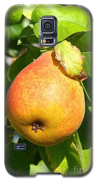 Winter Pear 1 Galaxy S5 Case