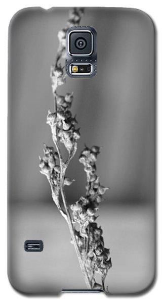 Winter Stem II Galaxy S5 Case