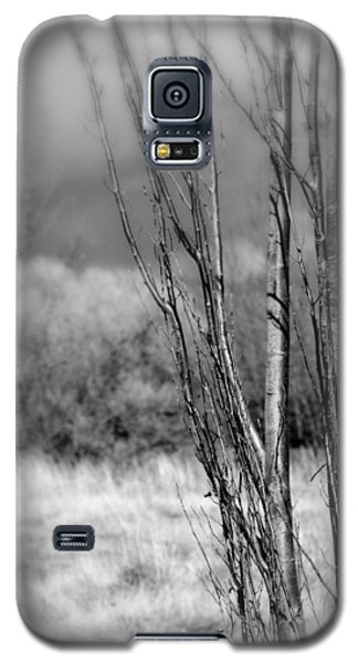Galaxy S5 Case featuring the photograph Winters Branch by Kathleen Grace