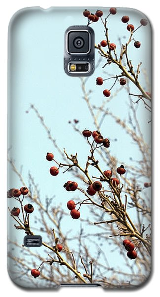 Winter's End Galaxy S5 Case