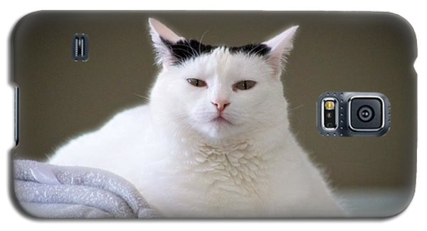 Galaxy S5 Case featuring the photograph Wise Cat by JM Photography