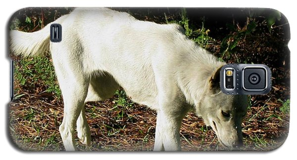 Galaxy S5 Case featuring the photograph Wolf 2 by Maria Urso