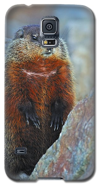 Woodchuck Galaxy S5 Case by Tony Beck