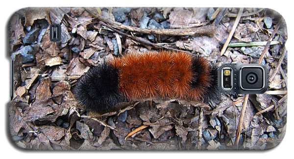 Wooly Bear Caterpillar Galaxy S5 Case