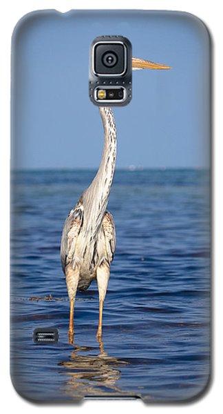 Wurdemann's Heron Galaxy S5 Case