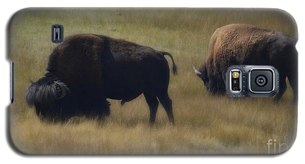 Wyoming Buffalo Galaxy S5 Case