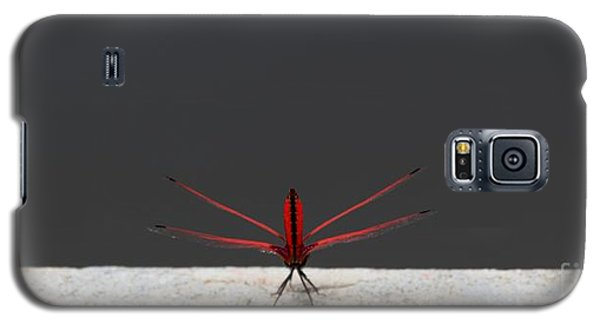 Galaxy S5 Case featuring the photograph X Wing Dragonfly by Nola Lee Kelsey