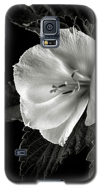 Yellow Alder In Black And White Galaxy S5 Case