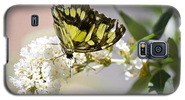 Yellow Butterfly Beauty Galaxy S5 Case by Andrea Hazel Ihlefeld