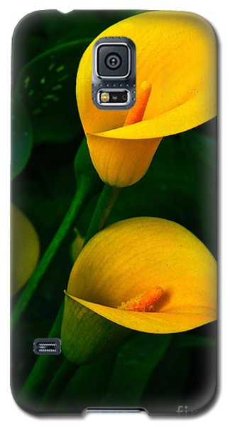 Yellow Calla Lilies Galaxy S5 Case by Byron Varvarigos