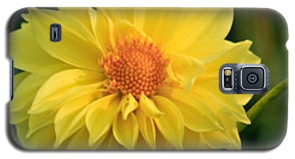 Galaxy S5 Case featuring the photograph Yellow Dahlia by Ann Murphy
