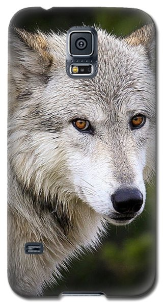Yellow Eyes Galaxy S5 Case by Steve McKinzie
