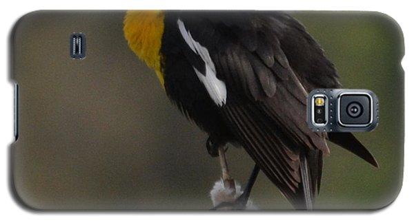 Yellow-headed Blackbird Galaxy S5 Case