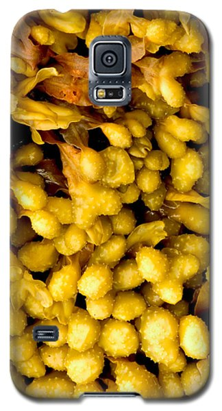 Yellow Kelp Pods Galaxy S5 Case by Brent L Ander