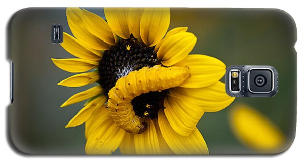 Galaxy S5 Case featuring the photograph Yellow On Yellow by Monte Stevens