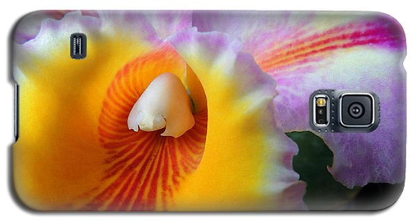 Galaxy S5 Case featuring the photograph Yellow Purple Orchid by Kristine Merc