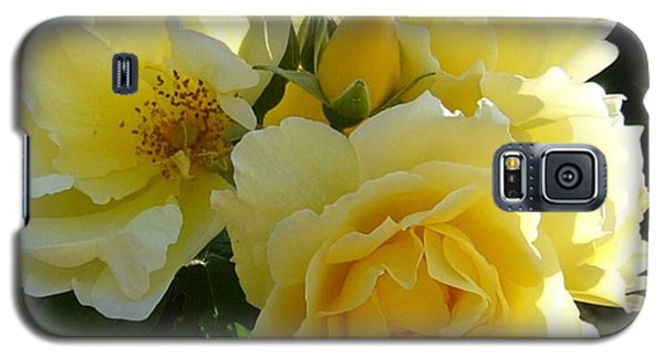 Galaxy S5 Case featuring the photograph Yellow Rose by Jim Sauchyn