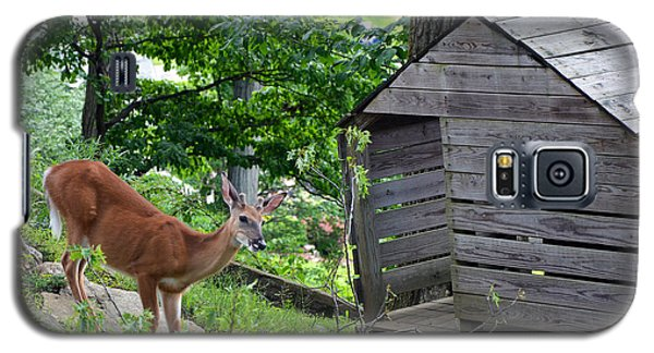 Galaxy S5 Case featuring the photograph Young Buck At Treehouse Hopatcong by Maureen E Ritter