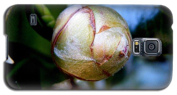 Young Camellia Galaxy S5 Case