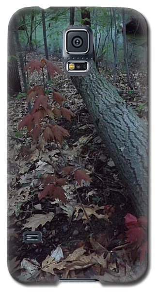Young Maple At The Swamp Galaxy S5 Case by Gerald Strine