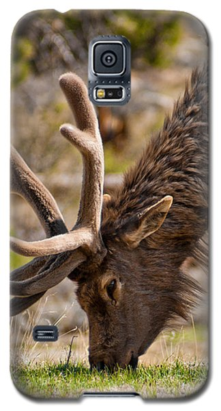 Young One Galaxy S5 Case by Colleen Coccia