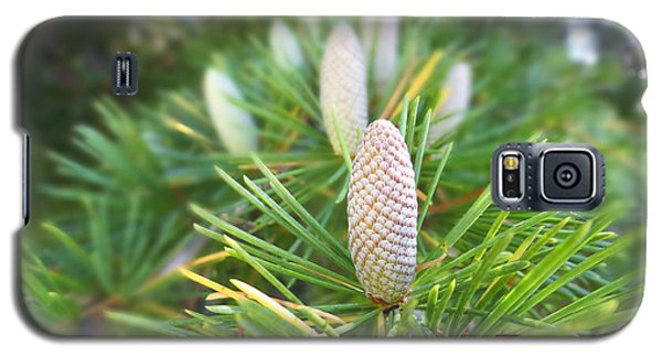 Galaxy S5 Case featuring the photograph Young Pine Cones by Anne Mott