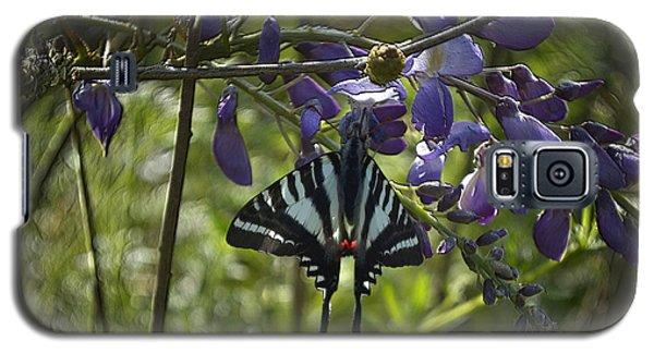 Zebra Swallowtail Butterfly 2 Galaxy S5 Case