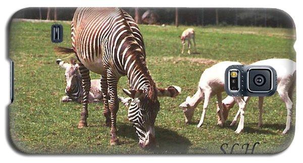 Zebra's Grazing Galaxy S5 Case