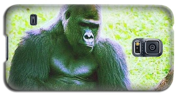 Cause Galaxy S5 Case - #zoo #wildlife #gorilla #ape #summer by Susan McGurl