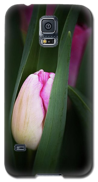Galaxy S5 Case featuring the photograph  A Pink Tulip  by Catherine Lau