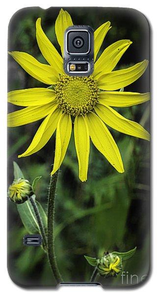 Arnica Montana Galaxy S5 Case