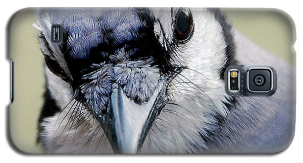 Bluejay Galaxy S5 Case -  Blue Jay by Skip Willits