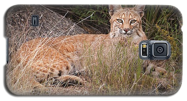 Bobcat At Rest Galaxy S5 Case