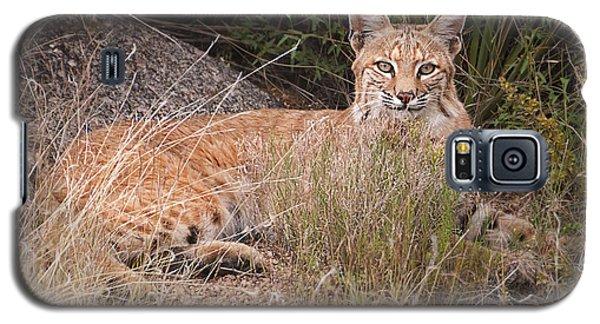 Bobcat At Rest Galaxy S5 Case