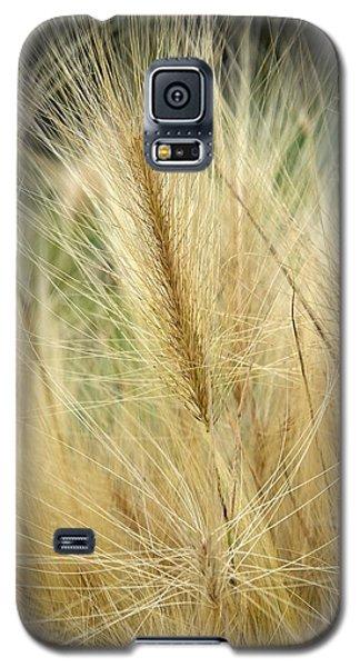 Foxtail Barley Galaxy S5 Case by Jouko Lehto