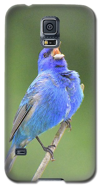 Hear The Indigo Bunting Sing Galaxy S5 Case by Alan Lenk
