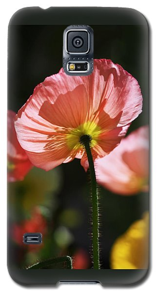 Icelandic Poppies Galaxy S5 Case by Rona Black
