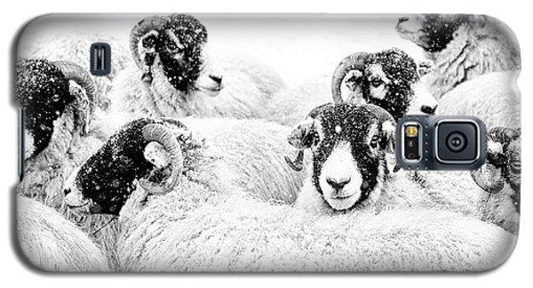 Sheep Galaxy S5 Case -  In Winters Grip by Janet Burdon