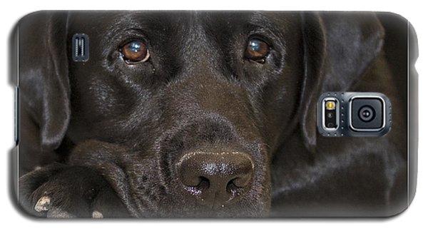 Labrador Retriever A1a Galaxy S5 Case