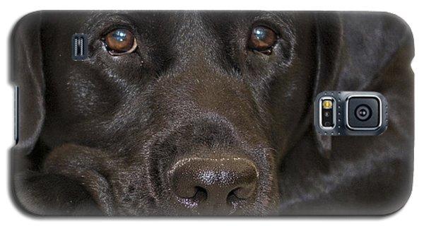 Labrador Retriever A1b Galaxy S5 Case
