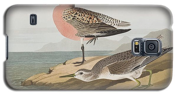 Red-breasted Sandpiper  Galaxy S5 Case by John James Audubon