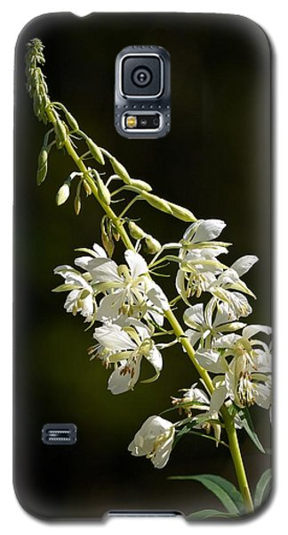 Galaxy S5 Case featuring the photograph  White Fireweed by Jouko Lehto