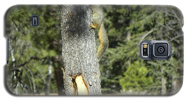 Squirrel Home Divide Co Galaxy S5 Case