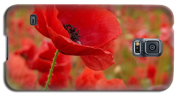 Red Poppies 3 Galaxy S5 Case by Jouko Lehto