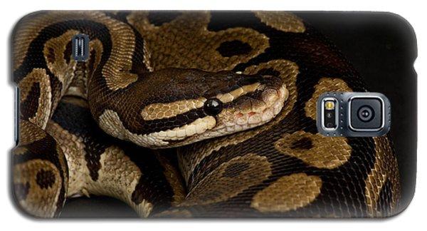 A Ball Python Python Regius Galaxy S5 Case