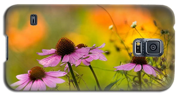 Galaxy S5 Case featuring the photograph Coneflower Symphony by Mary Amerman