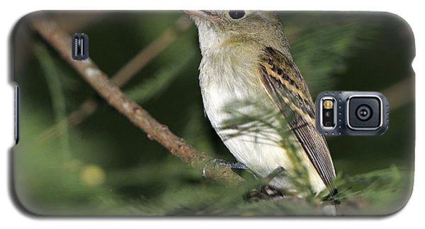 Acadian Flycatcher Galaxy S5 Case