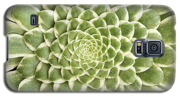 Galaxy S5 Case featuring the photograph Aeonium Succulent  by Catherine Lau